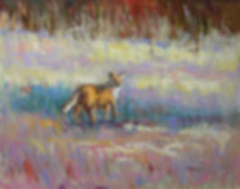 Red Fox in the Fields-16X20.jpg