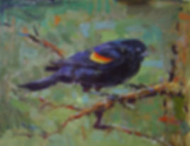 Redwinged Blackbird in Spring (11X14) #3