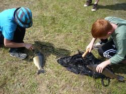 Lehrstunde Fangverarbeitung