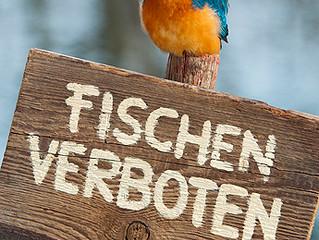Wichtig!!! Sperrung der Gewässer wegen Besatzmaßnahme bis 16.10.2014 +++ Fuchsbau- und Unterfeldweih