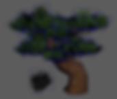 pinetree.PNG
