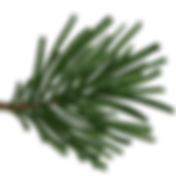 pine_leafs.png