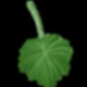 poisonousfruit_leaf.png