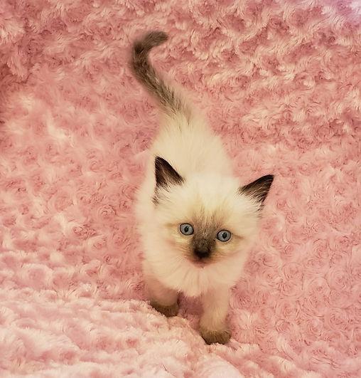 kitten 7.jpg