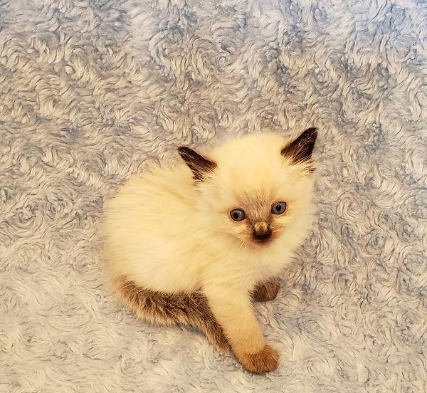 kitten 4.jpg