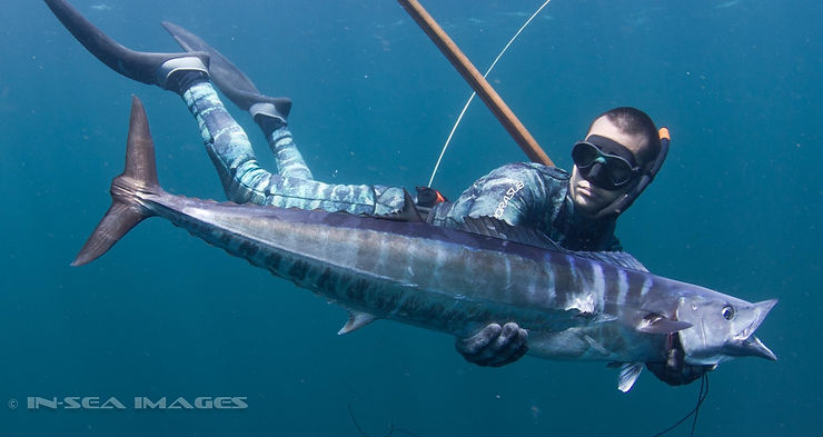 Wahoo Spearfishing
