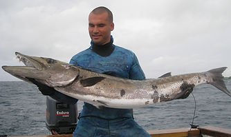 Barracuda Spearfishing