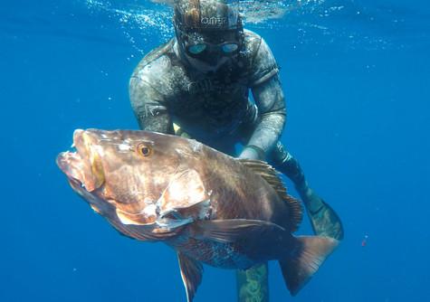 Spearfishing Tips on: Fish Behavior