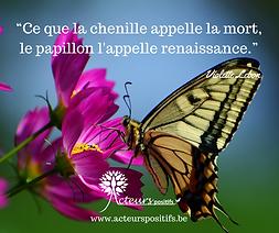 papillon renaissance.png