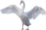 Goose-Photo-Background.png