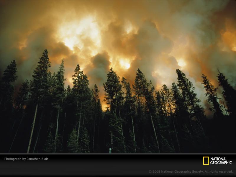 Fire Pine.jpg