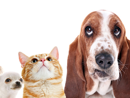 Being A Pet Friendly Vacation Rental