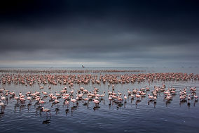 jeanne abrahams_pink sea_high res_.jpg