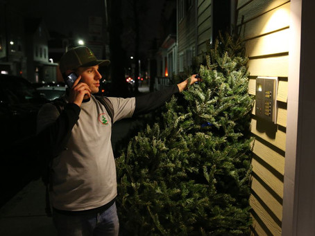 THE BOSTON GLOBE -                       That perfect tree is just a few clicks away