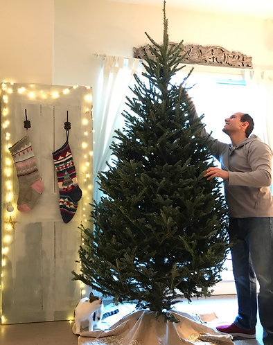 Tree Setup