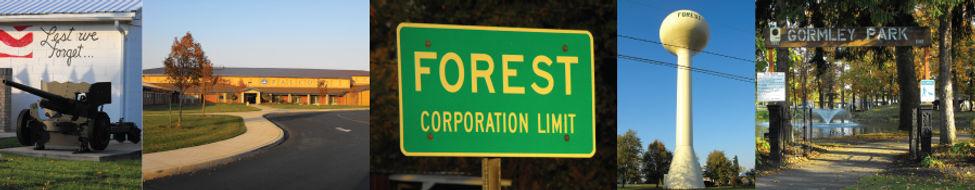 ForestStrip.jpg