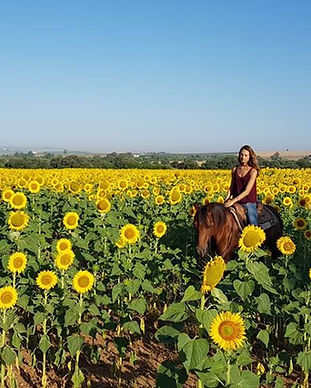 cheval balade campo.jpg