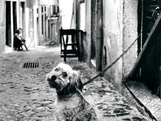 Cachorro em Lisboa