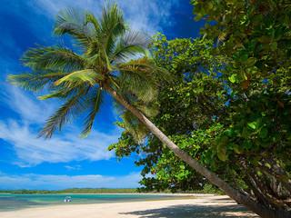 Praia Morro