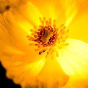 """Obra """"Flor I Amarelo #2"""", 2000"""