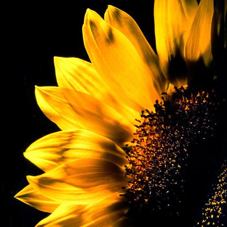 """Obra """"Flor I Amarelo"""", 2000"""