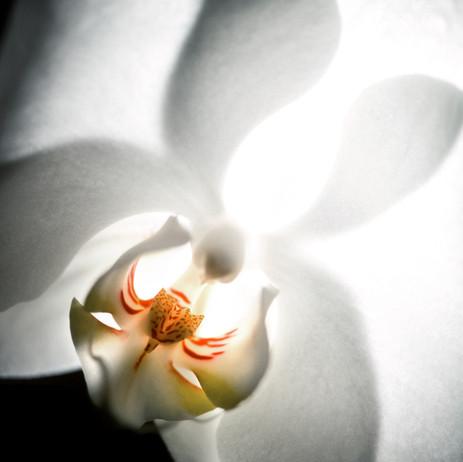 """Obra """"Flor I Branco"""", 2000"""