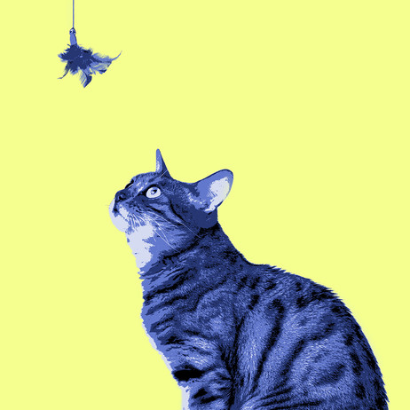 """Obra """"Gato e Brinquedo"""", 2016"""