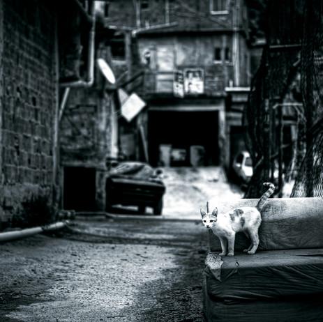 "Obra ""Gato I Morro do Andaraí"", 2012"