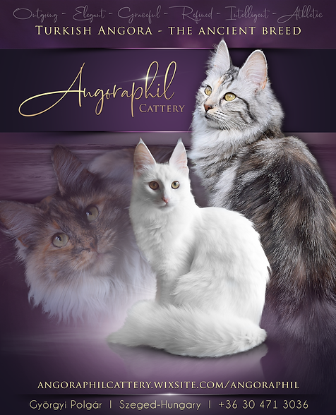 Angoraphil Cattery_1 (1).png