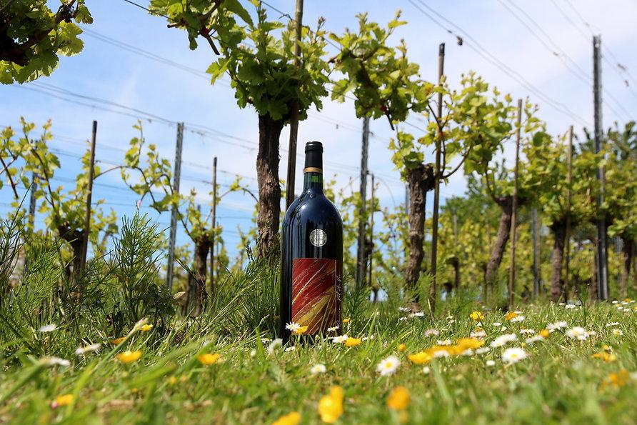 Domein Pot de Vin - zilveren medaille Beste Brabantse Wijn