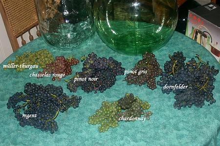 Druivenrassen Domein Pot de Vin