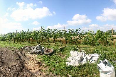 Wijngaard Vossem chardonnay