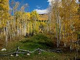ASWC Kilfinnan - Aspen Tree 1.jpg