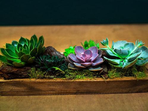Composición plantas crasas con base de madera