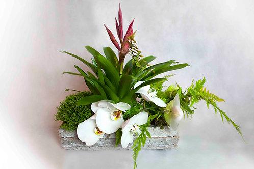 Composición de Plantas