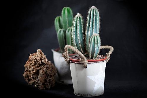 Cactus con Base