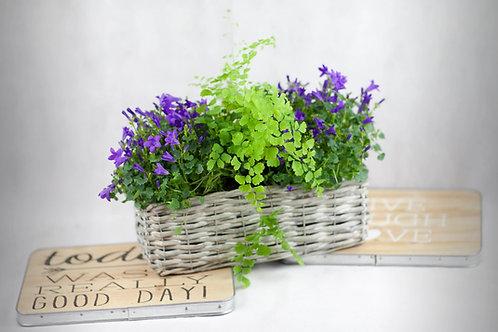 Cesto con plantas de temporada