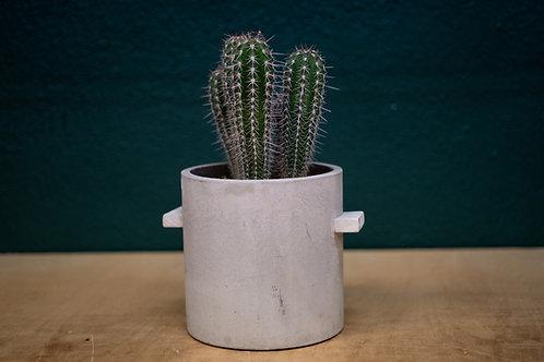 Planta de cactus 20cm