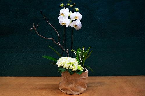Composición con orquidea + plantas + saco