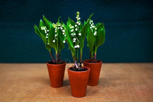3 plantas de Muget
