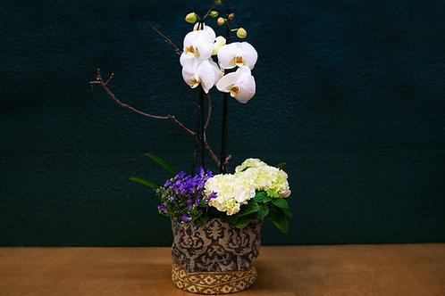Orquidea + plantas + cesta