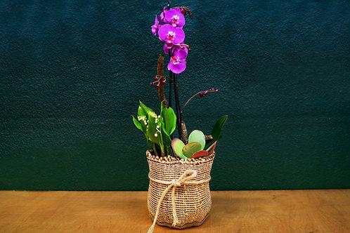 Composición con Orquídea malva + plantas + cesto