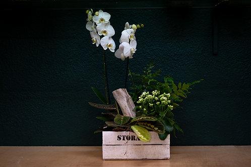 Caja de orquideas y plantas variadas