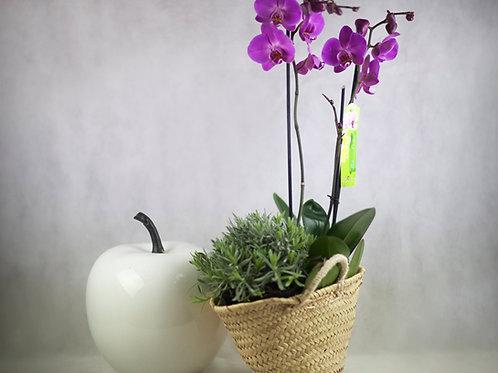 Orquídea y Planta de Temporada