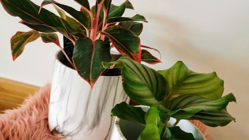 Duo potten met planten