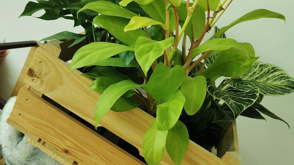 Plantenbox