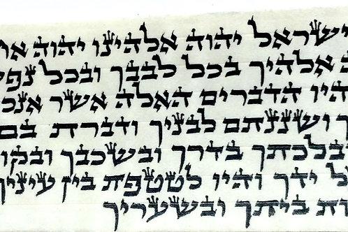 """לכתב אשכנזי בתים עור בהמה גסה 1650 ש""""ח לסט"""