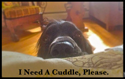 Cuddle, Please.jpg