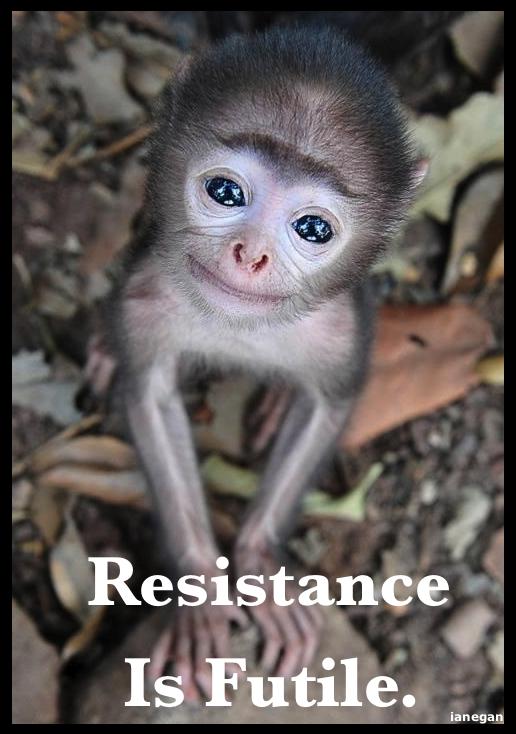 Cute Monkey.jpg