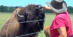 Christine Feeding The Bison